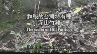 The Fairies in Taiwan 2008 collection : The secret of Hill Patridge