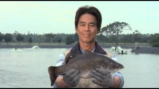 Taiwan's farmed sea bass (2 minute)
