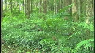 Tour in Oxygen-Rich Forests - Dongyan Mountain National Forest Recreation Area